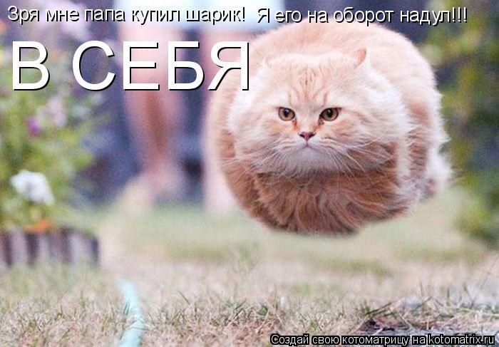 Котоматрица: Зря мне папа купил шарик! Я его на оборот надул!!! Я его на оборот надул!!! В СЕБЯ