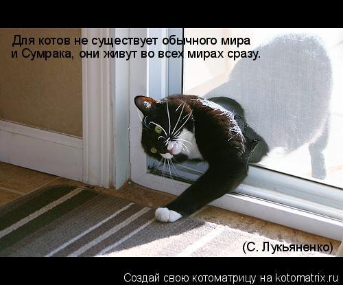 Котоматрица: Для котов не существует обычного мира и Сумрака, они живут во всех мирах сразу… (С. Лукьяненко)