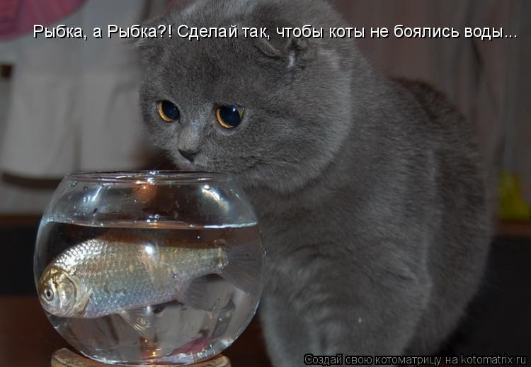 Как сделать так чтобы кошка меня любила - Блог - PrizivOnline
