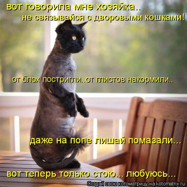 Котоматрица: вот говорила мне хозяйка..  не связывайся с дворовыми кошками! от блох постригли..от глистов накормили..  даже на попе лишай помазали...  вот те
