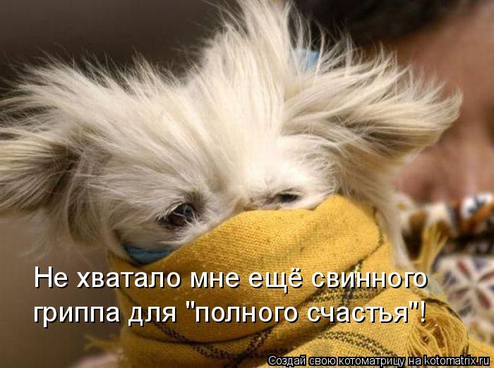 """Котоматрица: Не хватало мне ещё свинного  гриппа для """"полного счастья""""!"""