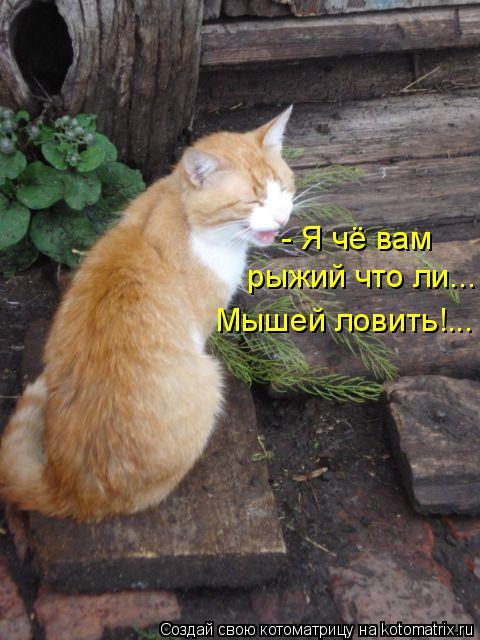 Котоматрица: - Я чё вам  рыжий что ли... Мышей ловить!...