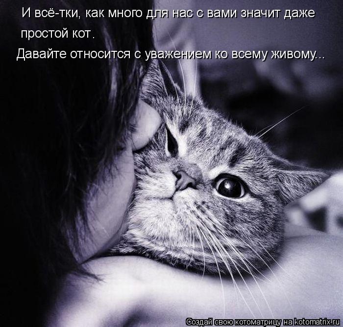 Котоматрица: И всё-тки, как много для нас с вами значит даже  простой кот . Давайте относится с уважением ко всему живому...