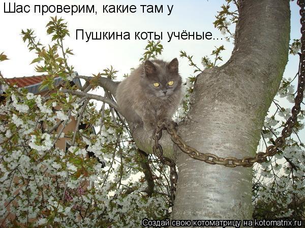 Котоматрица: Шас проверим, какие там у  Пушкина коты учёные...