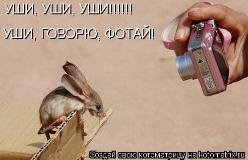 Котоматрица: УШИ, УШИ, УШИ!!!!!! УШИ, ГОВОРЮ, ФОТАЙ!