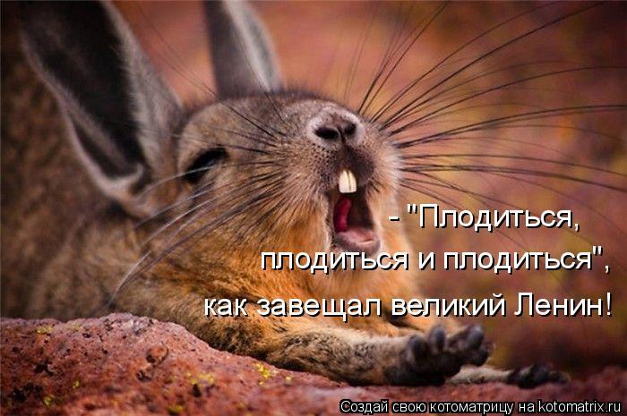"""Котоматрица: - """"Плодиться,  плодиться и плодиться"""",  как завещал великий Ленин!"""