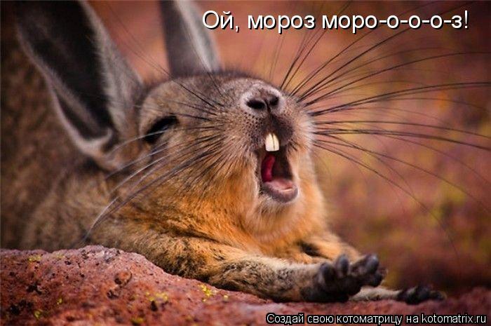 Котоматрица: Ой, мороз моро-о-о-о-з!