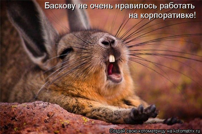 Котоматрица: Баскову не очень нравилось работать  на корпоративке!