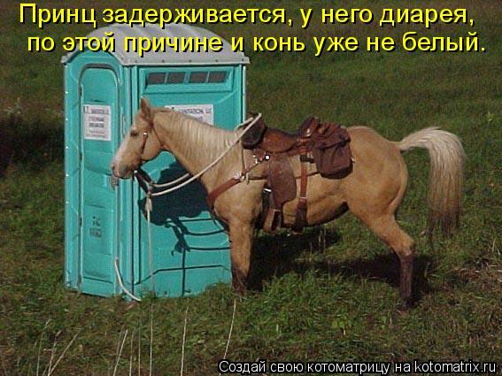 Котоматрица: Принц задерживается, у него диарея,  по этой причине и конь уже не белый.
