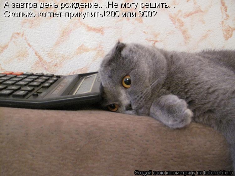 Котоматрица: А завтра день рождение....Не могу решить... Сколько котлет прикупить!200 или 300?