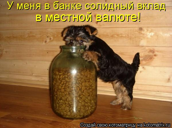 Котоматрица: У меня в банке солидный вклад  в местной валюте!