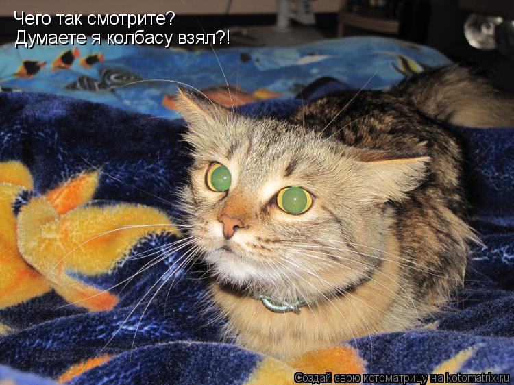 Котоматрица: Чего так смотрите? Думаете я колбасу взял?!