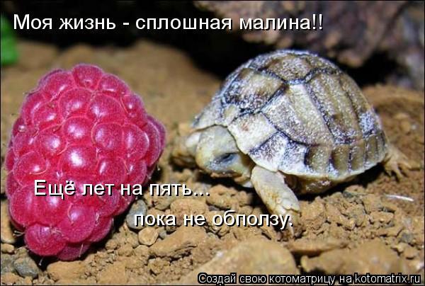 Котоматрица: Моя жизнь - сплошная малина!! Ещё лет на пять...  пока не обползу.