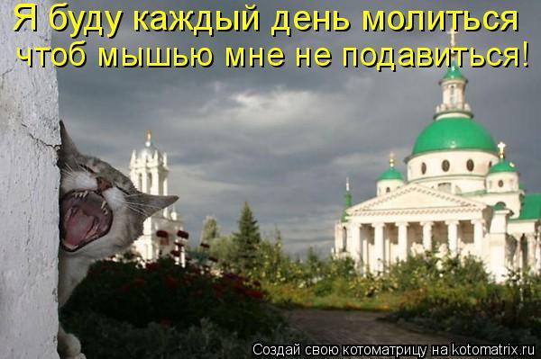 Котоматрица: Я буду каждый день молиться  чтоб мышью мне не подавиться!