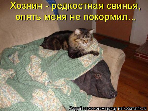 Котоматрица: Хозяин - редкостная свинья,  опять меня не покормил...