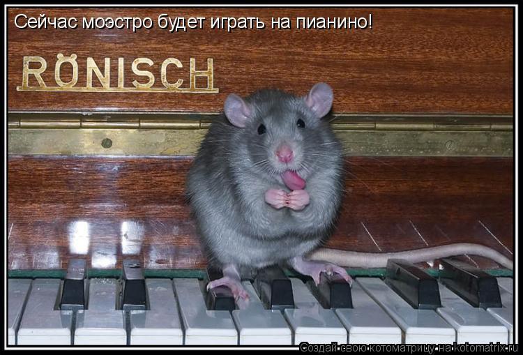 Котоматрица: Сейчас моэстро будет играть на пианино!