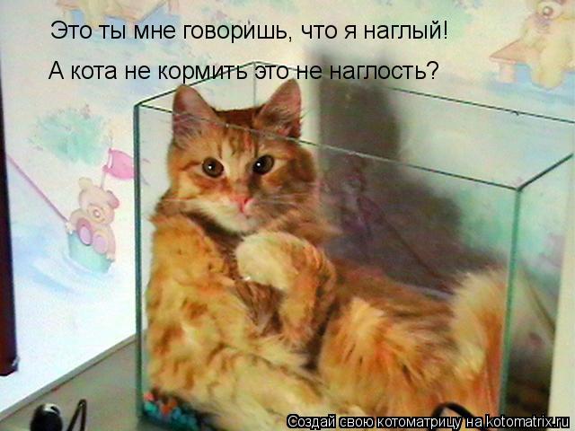 Котоматрица: Это ты мне говоришь, что я наглый! А кота не кормить это не наглость?