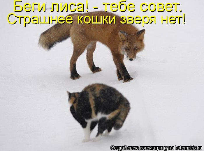 Котоматрица: Беги лиса! - тебе совет.  Страшнее кошки зверя нет!