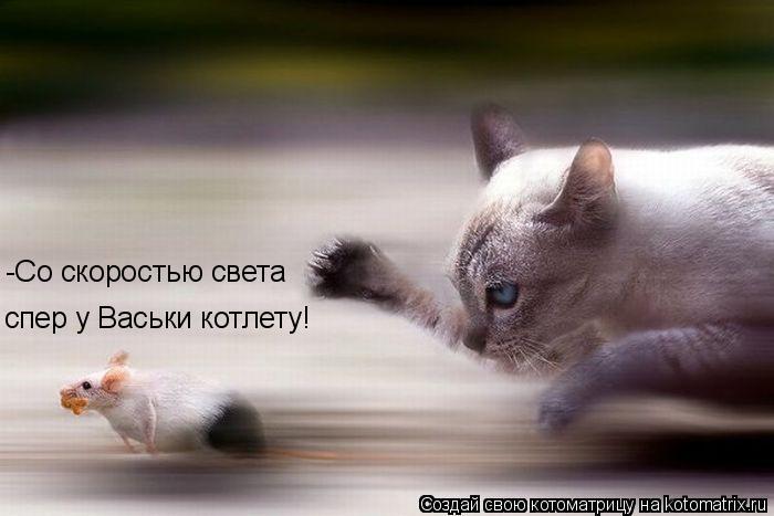 Котоматрица: -Со скоростью света спер у Васьки котлету!