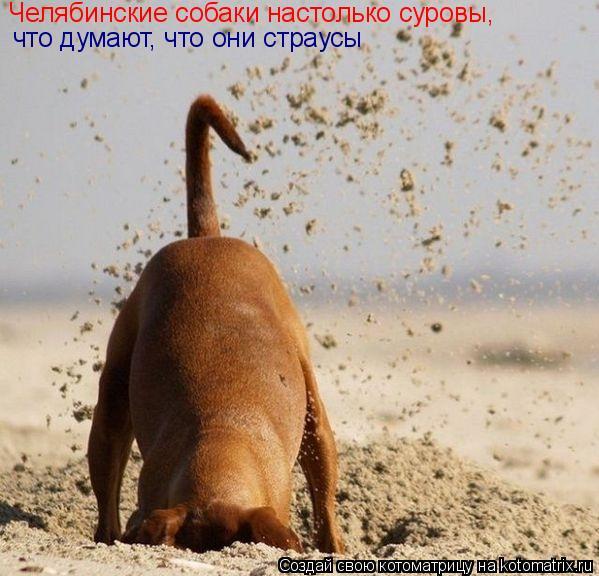 Котоматрица: Челябинские собаки настолько суровы, что думают, что они страусы