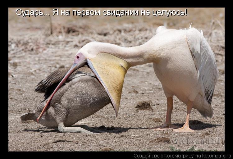 Котоматрица: Сударь... Я на первом свидании не целуюсь!