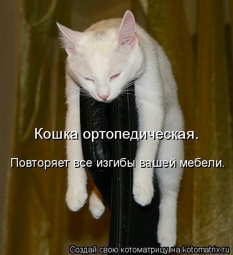 Котоматрица: Кошка ортопедическая. Повторяет все изгибы вашей мебели.