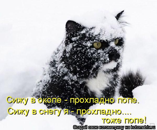 Котоматрица: Сижу в окопе - прохладно попе. Сижу в снегу я - прохладно.... тоже попе!