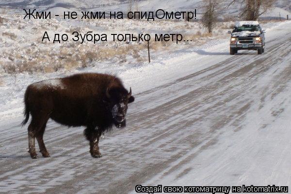 Котоматрица: Жми - не жми на спидОметр! А до Зубра только метр...