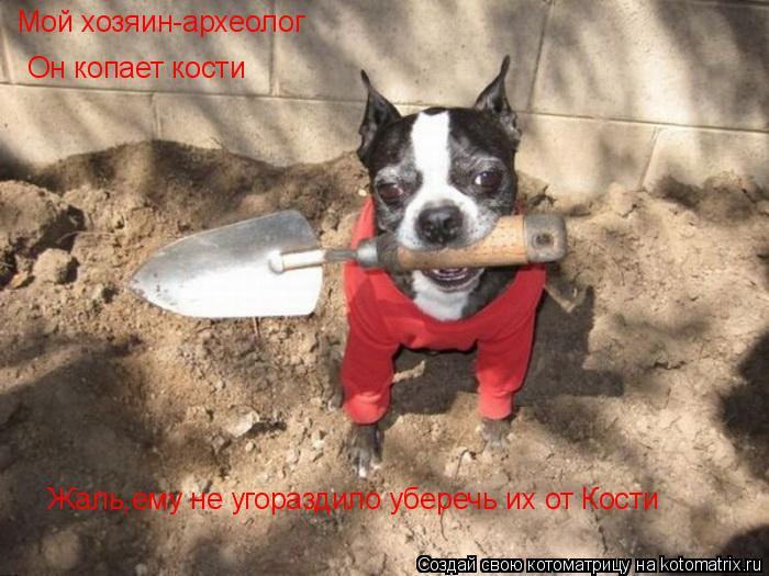 Котоматрица: Мой хозяин-археолог Он копает кости Жаль,ему не угораздило уберечь их от Кости