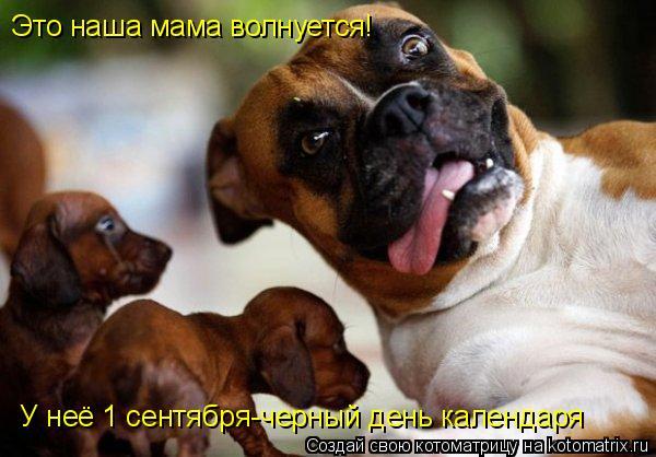 Котоматрица: Это наша мама волнуется! У неё 1 сентября-черный день календаря
