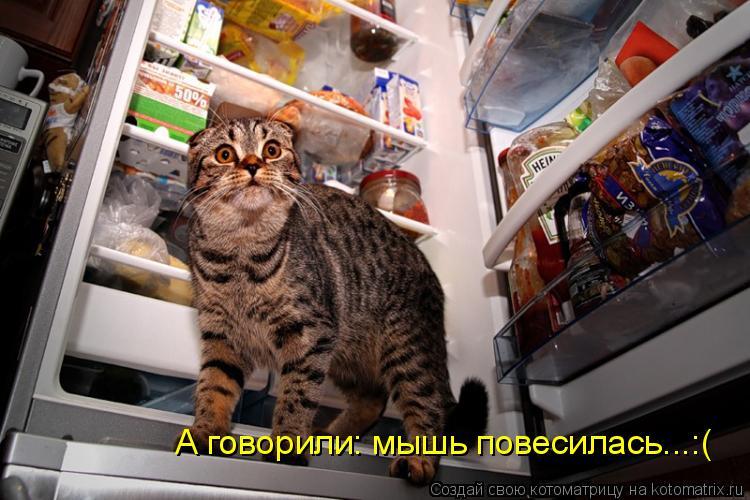 Котоматрица: А говорили: мышь повесилась...:(