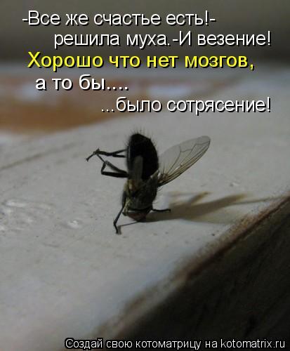 Котоматрица: -Все же счастье есть!- решила муха.-И везение! Хорошо что нет мозгов, а то бы.... ...было сотрясение!
