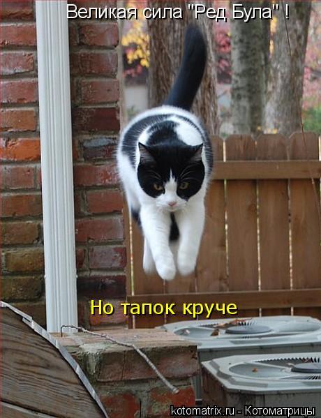 """Котоматрица: Великая сила """"Ред Була"""" !  Но тапок круче"""
