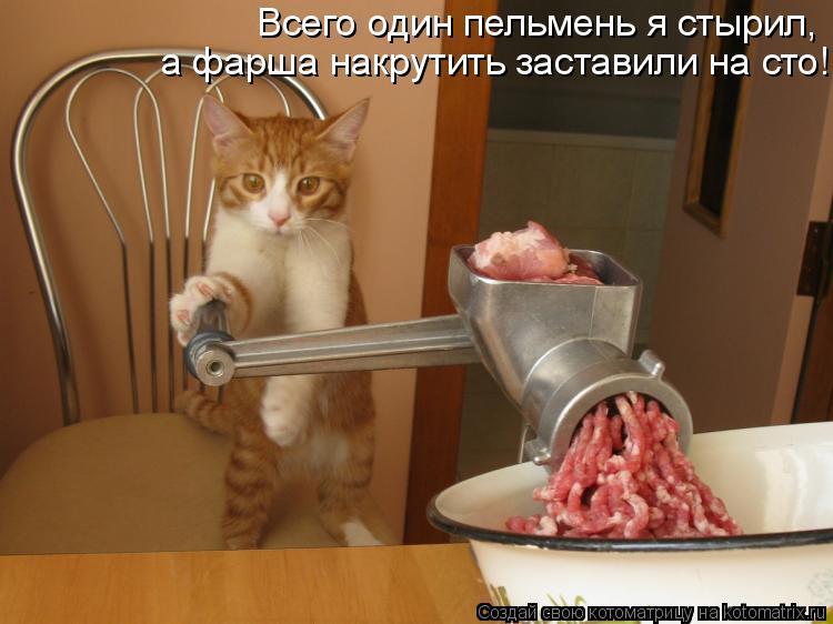 Котоматрица: Всего один пельмень я стырил,  а фарша накрутить заставили на сто!