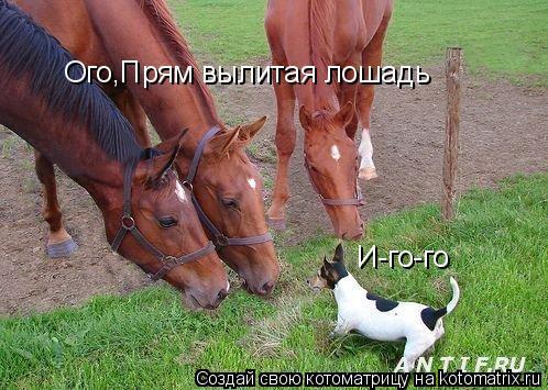 Котоматрица: И-го-го Ого,Прям вылитая лошадь