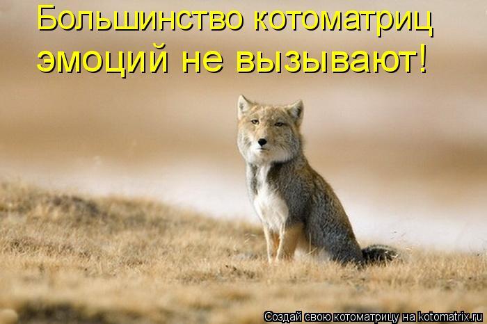 Котоматрица: Большинство котоматриц  эмоций не вызывают!