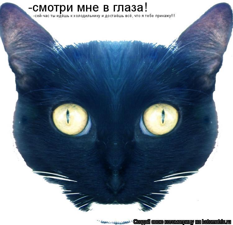 Котоматрица: -смотри мне в глаза! -сей-час ты идёшь к холодильнику и достаёшь всё, что я тебе прикажу!!!