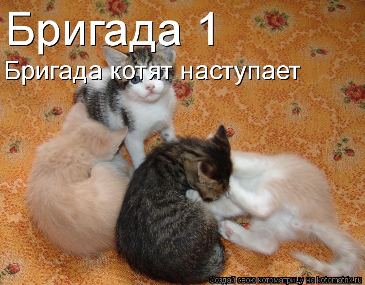 Котоматрица: Бригада№1 Бригада котят наступает
