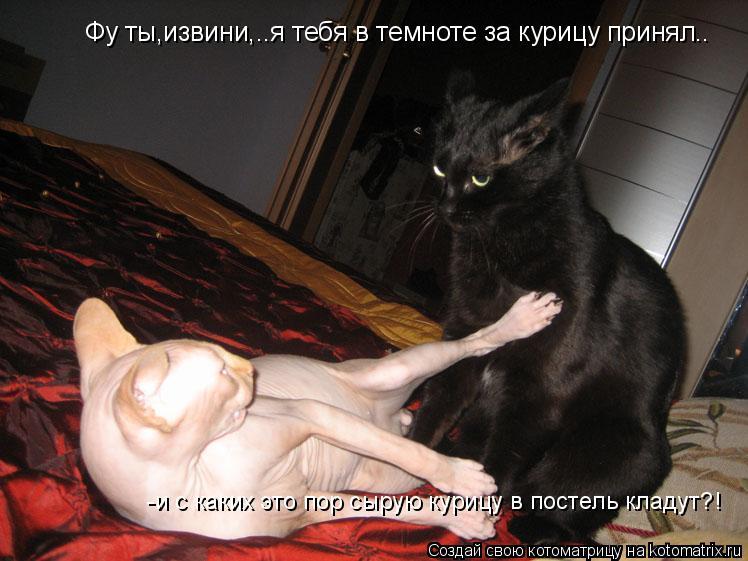 Котоматрица: Фу ты,извини,..я тебя в темноте за курицу принял.. -и с каких это пор сырую курицу в постель кладут?!
