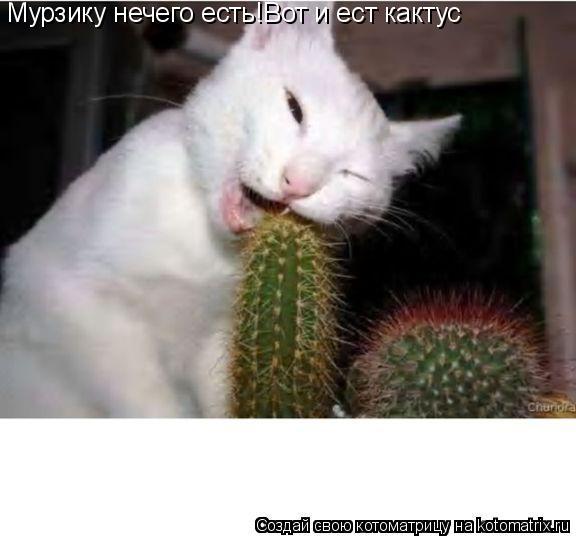 Котоматрица: Мурзику нечего есть!Вот и ест кактус