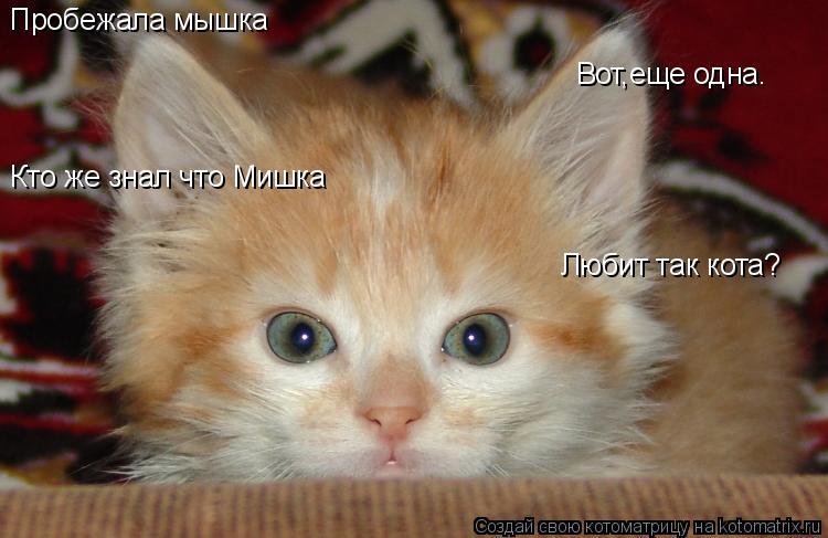 Котоматрица: Пробежала мышка Вот,еще одна. Кто же знал что Мишка Любит так кота?