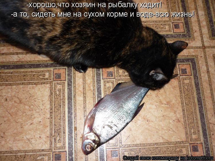 Котоматрица: -хорошо,что хозяин на рыбалку ходит! -а то, сидеть мне на сухом корме и воде-всю жизнь!