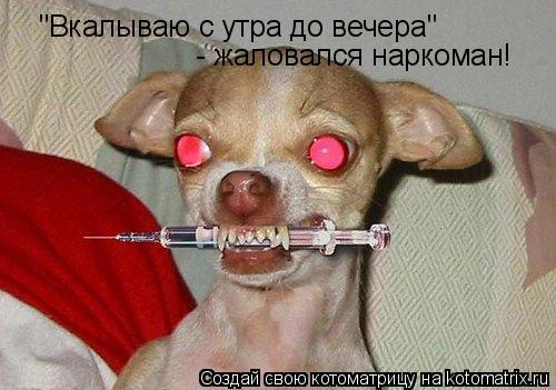 """Котоматрица: """"Вкалываю с утра до вечера"""" - жаловался наркоман!"""