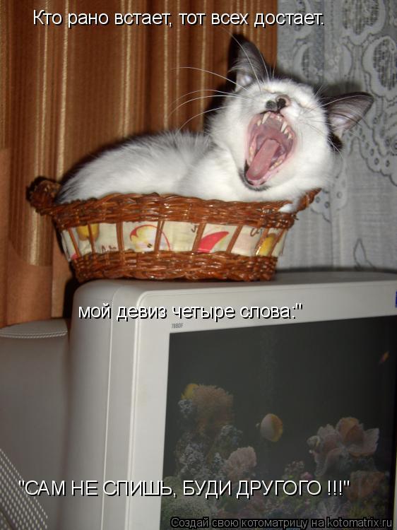 """Котоматрица: Кто рано встает, тот всех достает. мой девиз четыре слова:"""" """"САМ НЕ СПИШЬ, БУДИ ДРУГОГО !!!"""""""