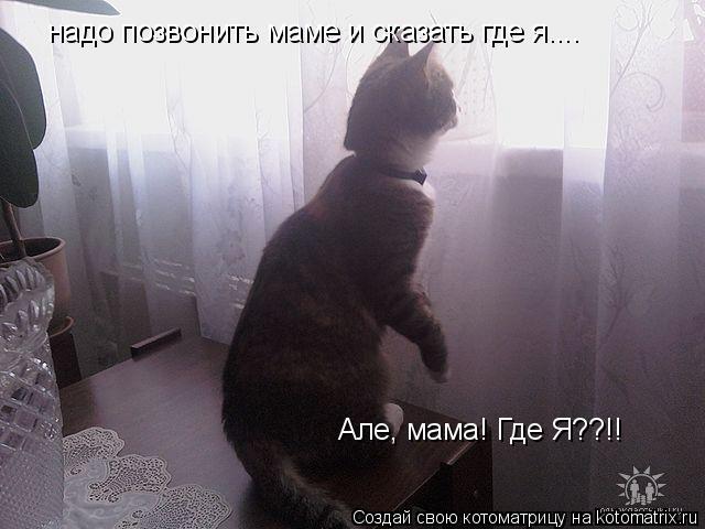 Котоматрица: надо позвонить маме и сказать где я.... Але, мама! Где Я??!!