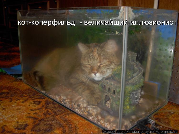 Котоматрица: кот-коперфильд  - величайший иллюзионист