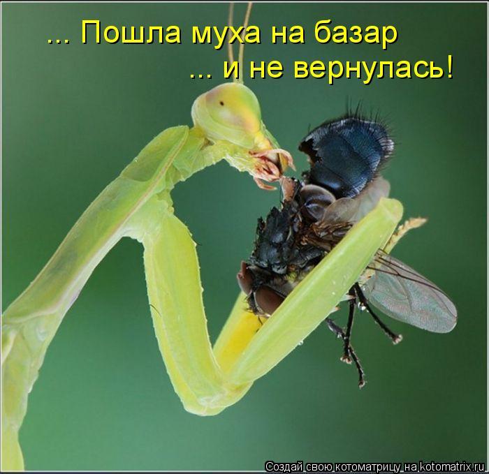 Котоматрица: ... Пошла муха на базар ... и не вернулась!
