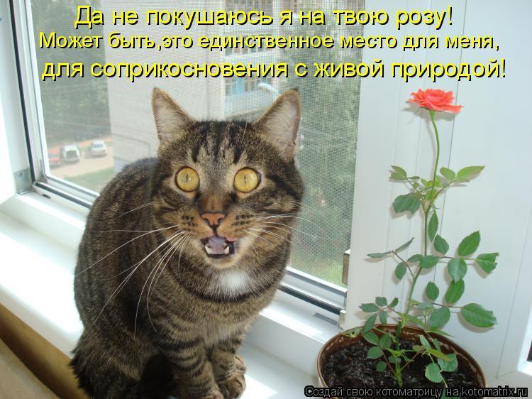 Котоматрица: Да не покушаюсь я на твою розу! для соприкосновения с живой природой! Может быть,это единственное место для меня,