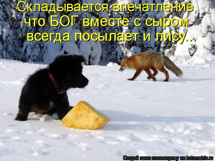 Котоматрица: Складывается впечатление,  что БОГ вместе с сыром  всегда посылает и лису...