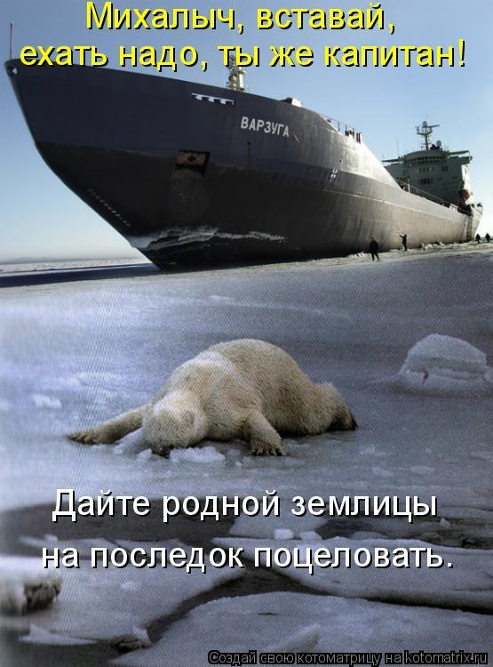 Котоматрица: Михалыч, вставай,  ехать надо, ты же капитан! Дайте родной землицы  на последок поцеловать.